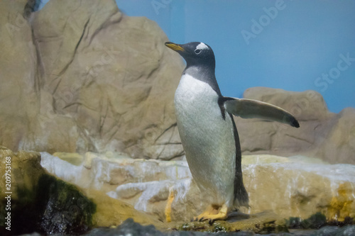 Deurstickers Pinguin penguin on the rock