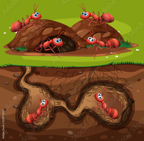 Photo A Group of Working Ants in Hole