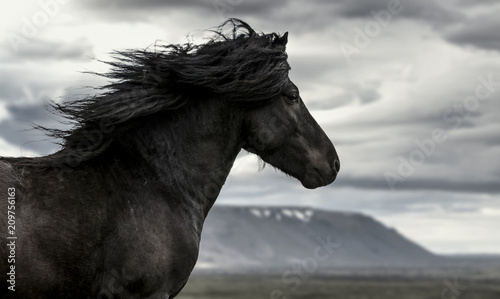 Poster Chevaux Horse in the wind