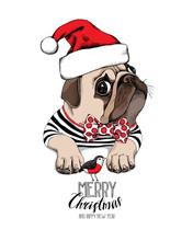 Christmas Card. Pug Dog In A S...