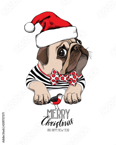 0aefdb1e4d1 Christmas card. Pug Dog in a striped cardigan