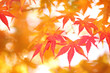 Blurred orange and red colored autumn season maple leaves. Selective focus used.