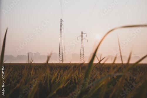 Fotografía  campo di grano al alba