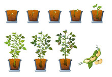 Soy Beans Seed Sprout In Pot Icons Set. Flat Illustration Of 9 Soy Beans Seed Sprout In Pot Vector Icons For Web