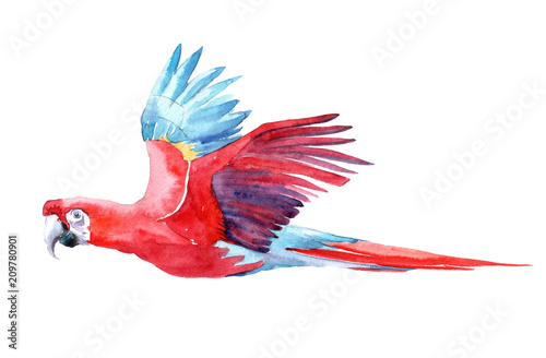 Photo  Isolated watercolor clipart with parrot.