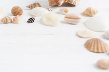 Seashells On White Wooden Back...