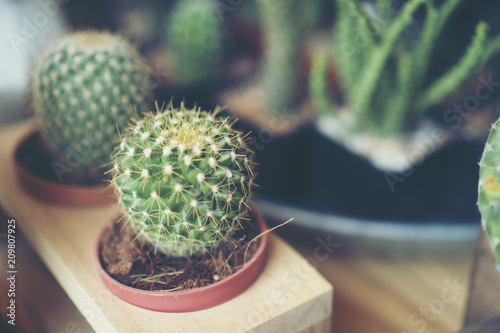 Foto op Canvas Cactus Cactus in ceramic pot on a wood table background.