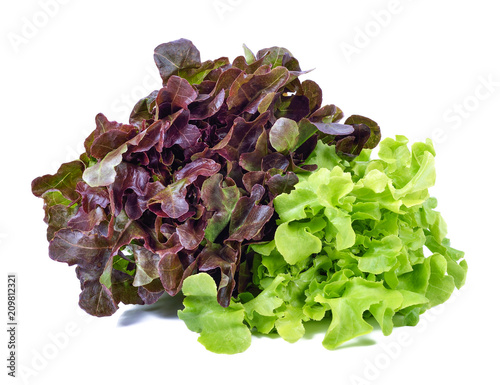 Fototapeta green and red lettuce isolated on white background obraz