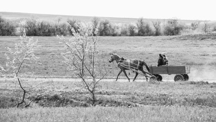 horse harnessed in a cart carries people and loads in the summer landscape, rural life,