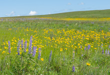 A Field Of Colorful Wildflowers In Northeast Oregon
