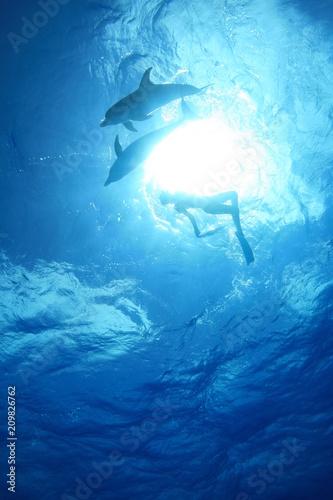 Fotografia, Obraz  イルカと泳ぐ