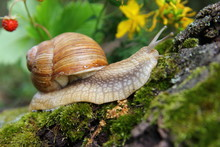 Beautiful Snail In The Forest