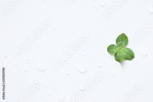 四つ葉のクローバー 水滴