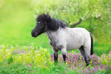 Pony Standing In Flowers Meadow