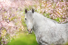 White Horse Portrait In Spring...