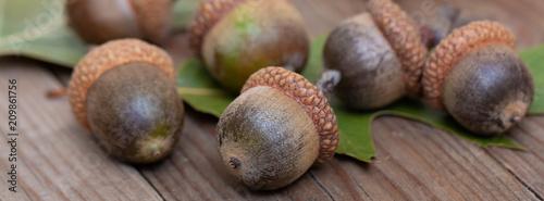 panorama acorn  oak leaf wooden table