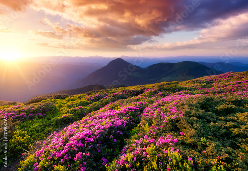 Foto auf Gartenposter Gebirge Mountains during flowers blossom and sunrise. Beautiful natural landscape at the summer time