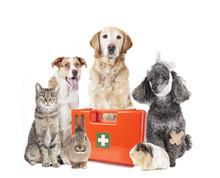 Many Animals First Aid Box