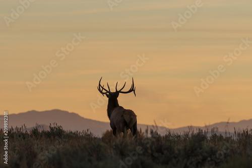 Deurstickers Hert Bull Elk Silhouetted at Sunrise