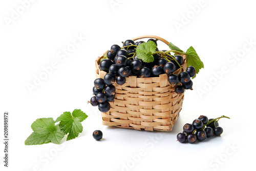 A basket of fresh blackcurrants