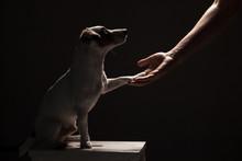 Dog Paw Takes The Man