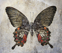 A Grunge Butterfly Wallpaper Texture