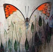 A Grunge Butterfly Wallpaper T...