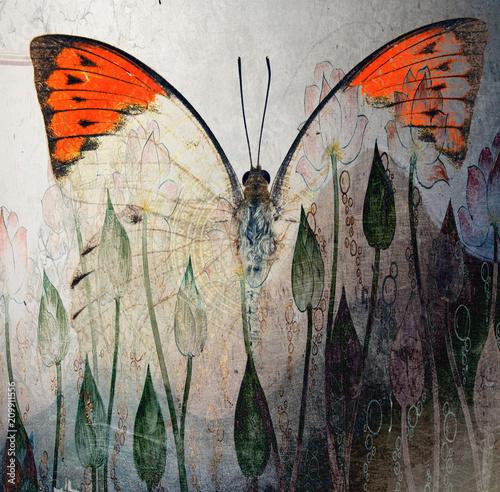 grunge tapeta tekstury motyla