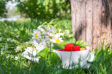 Fresh Juicy Strawberries In The Garden Among The Grass In A White Bowl, The Concept Of Gardening