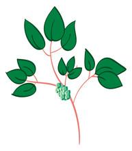 Poison Ivy, Simple Illustration