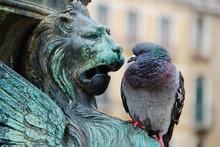 Pigeon And Statue Staredown