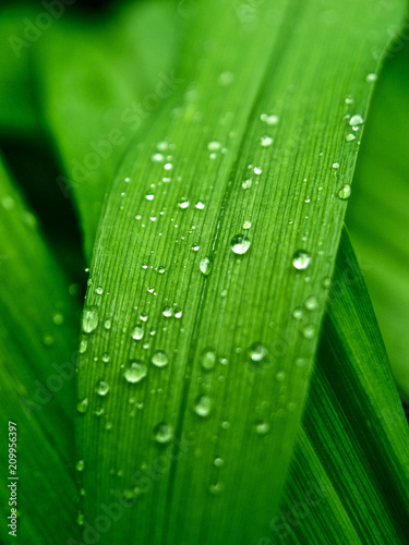 Obraz water, leaf, green, nature, dew, grass, plant, rain, drop, drops, macro, wet, leaves, flora, fresh, close-up, garden, summer, droplet, environment, freshness, natural, texture, life, raindrop - fototapety do salonu