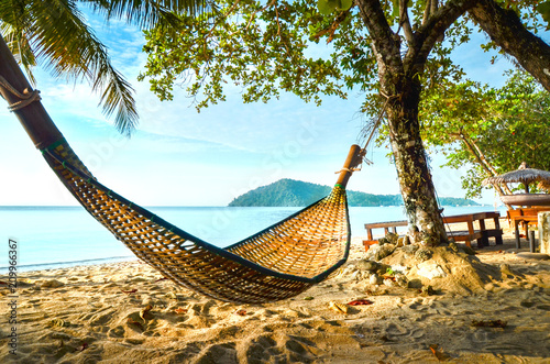 Fotografie, Obraz Empty hammock between palm trees on tropical beach