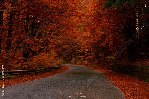 Recess Fitting Magenta Road in autumn forest with red leaves trees