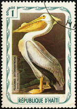 White Pelican Painted By Audob...