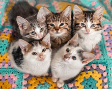 Five Kittens Cutely Huddled To...