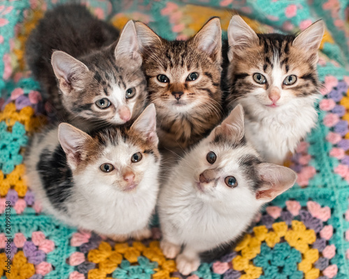 Fotografía Five kittens cutely huddled together on a colourful blanket
