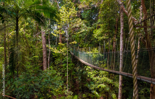 Photo A beautiful atmospheric view of the dense rainforest and the suspension bridge which is part of the world's longest canopy walkway in Taman Negara National Park, Malaysia