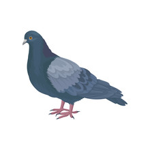 Detailed Vector Icon Of Pigeon Dove. Bird With Small Head, Short Legs And Blue-gray Feathers. Wild Feathered Animal. Fauna Theme
