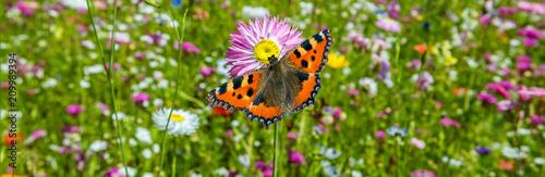 Fotografie, Obraz  Schmetterling auf einer Blumenwiese