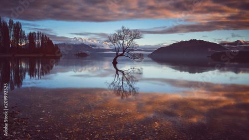 samotne-drzewo-wanaka-wyspa-poludniowa-nowej-zelandii