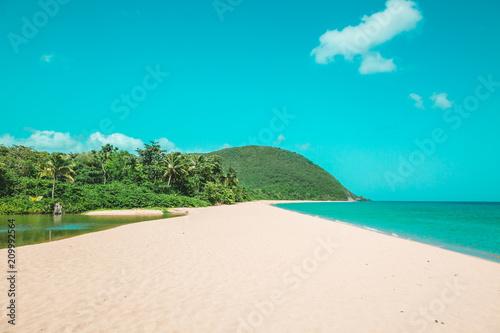 Papiers peints Turquoise entre la mer et la mangrove