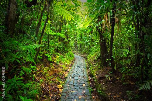 Foto op Canvas Weg in bos jungle guadeloupe