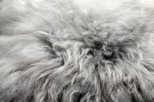 Abstract Fur Background. Sheepskin Rug.