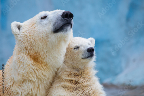 Fotobehang Ijsbeer Polar bear with cub