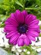 flower,pink,nature,bloom,gardening,