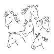 horse head sketch, animal line art style, vector template ready for use