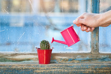Small Pink Watering Can In A F...
