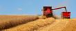 canvas print picture - Agriculture en France