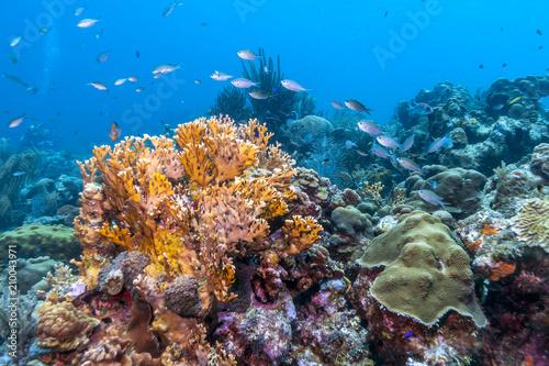 Keuken foto achterwand Onder water Caribbean coral reef